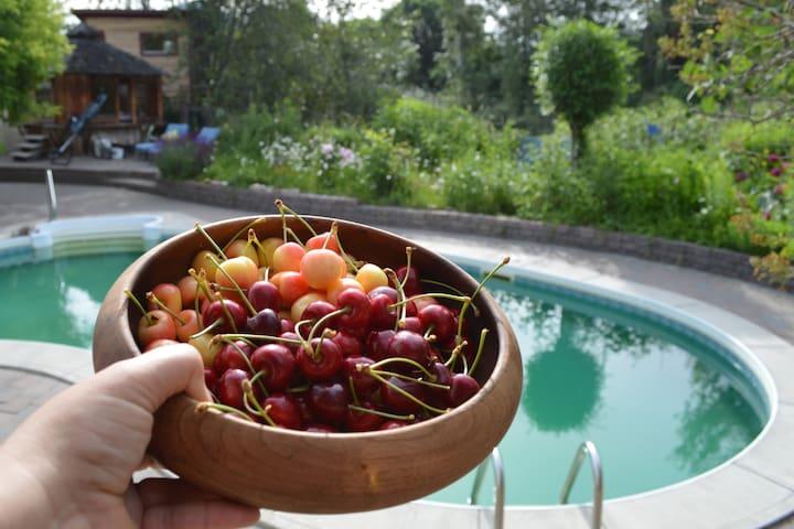 eco king treehouse, farm table dinner & breakfast