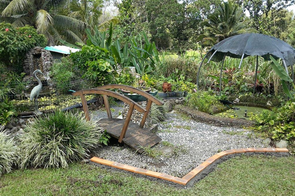 Jardin côté bassin