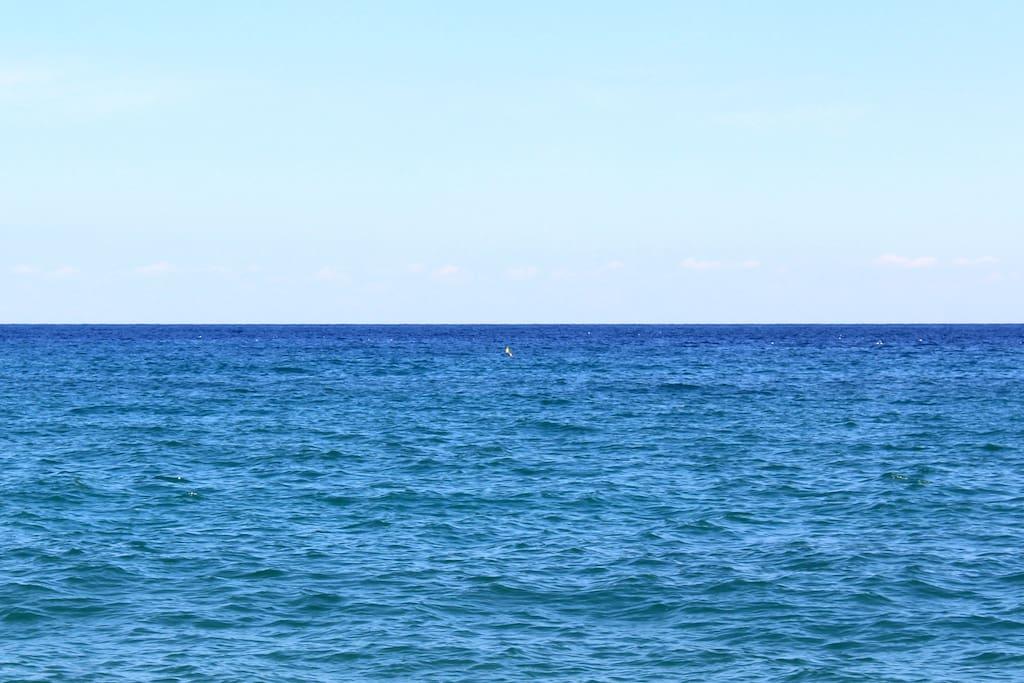 delfini a settembre