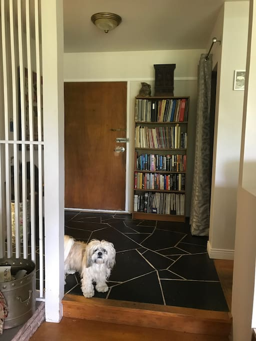 entrance hall, dog not included