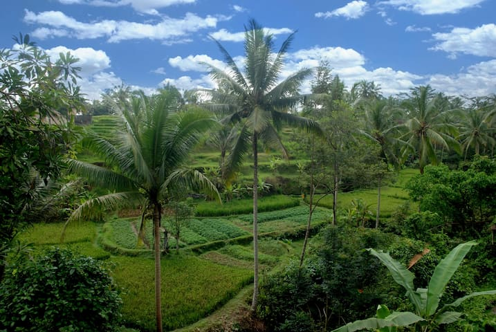 Offer 1bedroom home!ricefield view,pool,Ubud @Bs1m