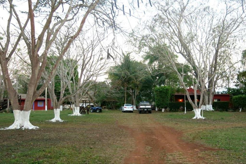 Así luce la entrada al rancho después del invierno.