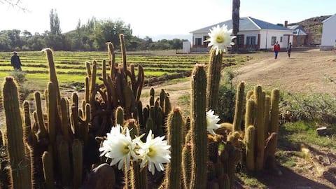 Karoo Farm - Strydomsvlei