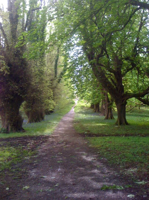 Friar's Walk, at Muckross Abbey. Beautiful all year round..