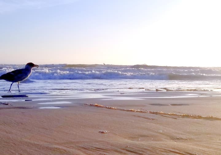SEA ME & WAVE Pismo Oceano Shell Grover SLO Avila