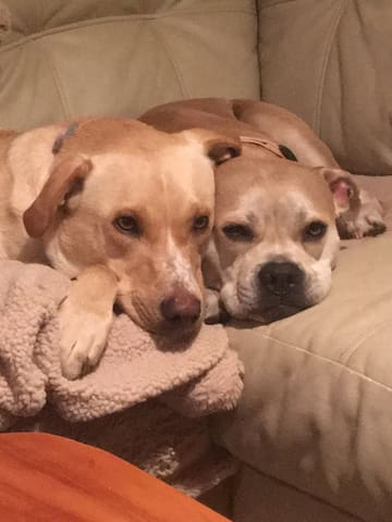 Emily and Diesel-Lynn love to make new friends!