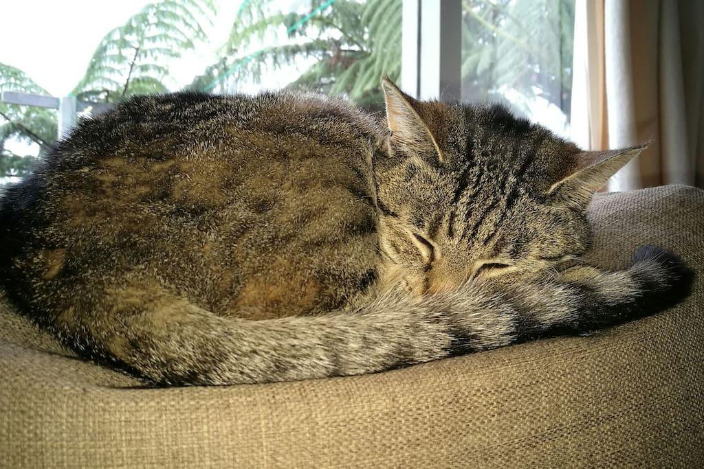 House cat Riga