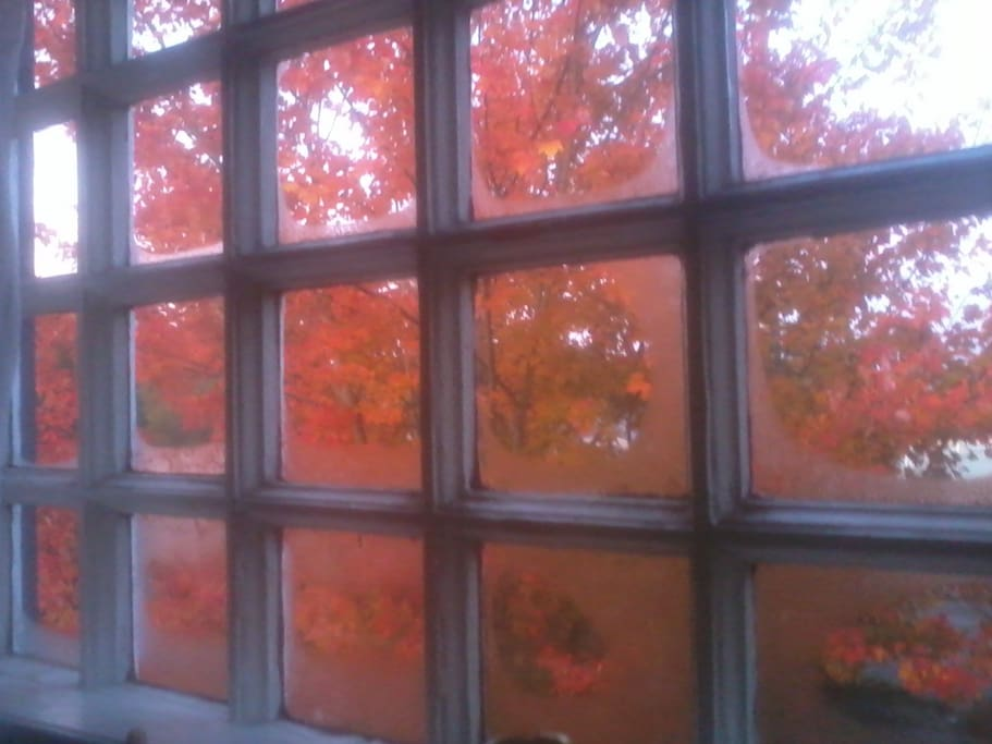 fall view from bedroom
