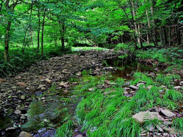 Our stream is a short walk from the cabin and is a wonderful spot to explore!