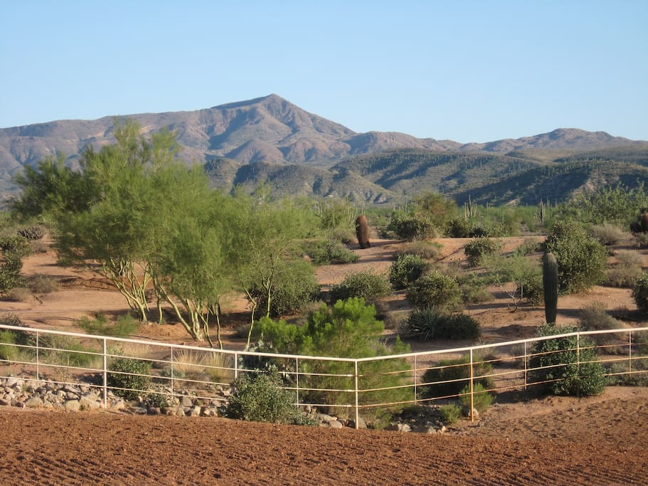 Our backyard, located on the Tonto National Forest