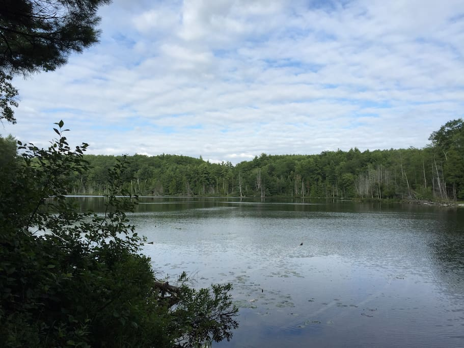 Hike along Ransom Lake Natural Area adjacent to Tranquility Base