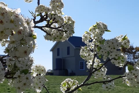 Figtrees Cottage- Rural charm and serenity, Orange