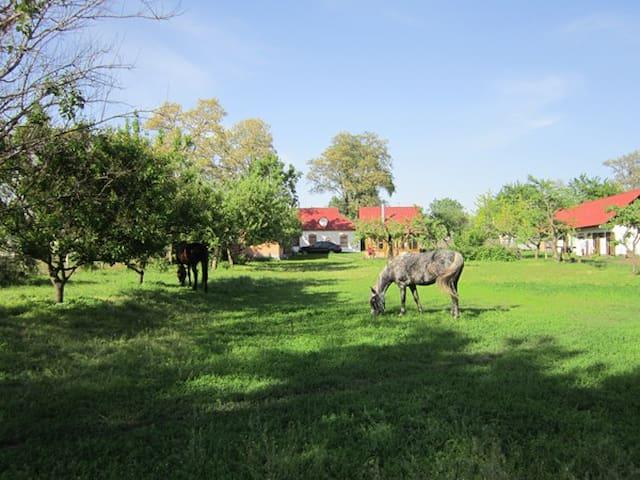 Сельская усадьба Казачья Застава - Rokytne - Rumah Pohon