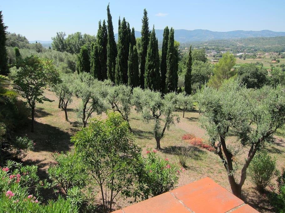 Le parc de plus de 5000m2 avec restanques et oliviers.