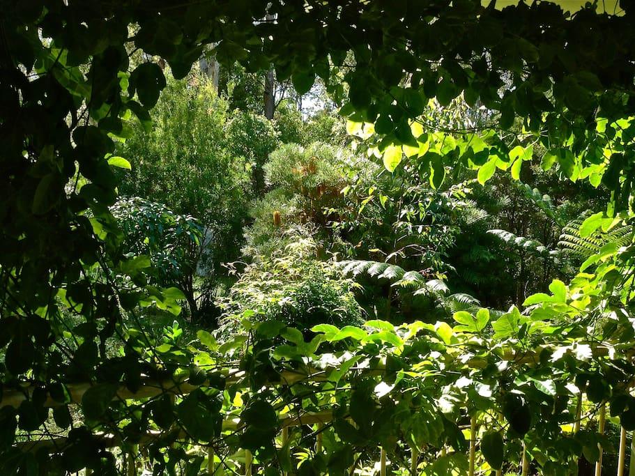 the garden through the passion fruit vine