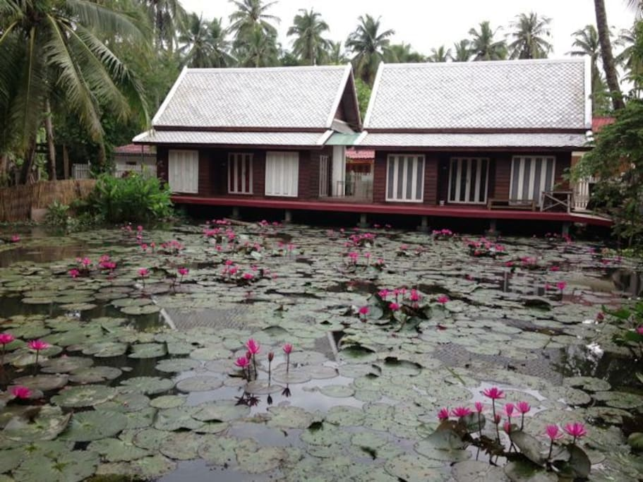 A little oasis with Lotus, quiet