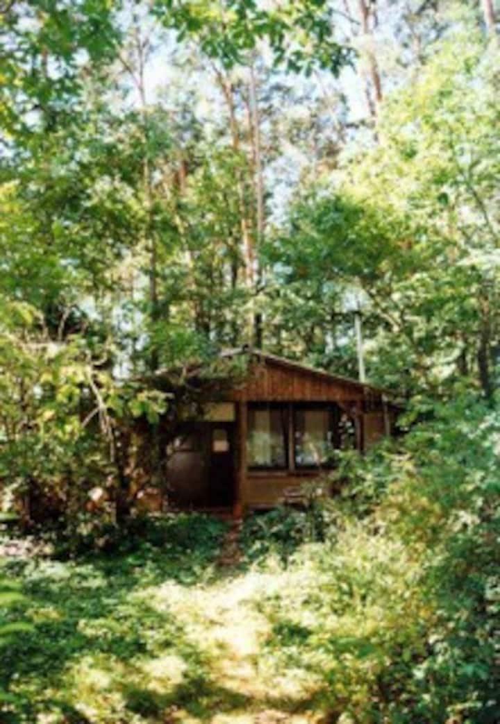 natur pur mitten in Wald