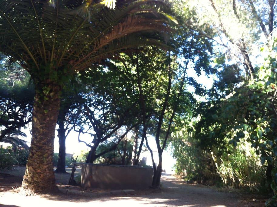 Vue vers l'entrée/partie avant  du jardin qui donne sur la rue coté promenade A marinella. La plage est au bout du chemin :)
