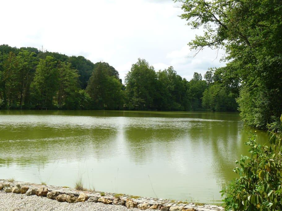 Vue sur l'étang (qui ne fait pas partie de la location)