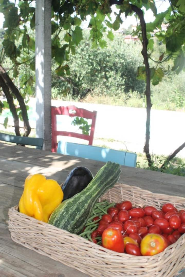 products in the vegetable garden