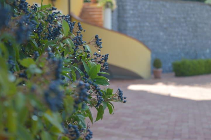 La tavernetta negli ulivi - Lauria
