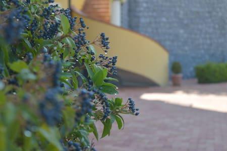 La tavernetta negli ulivi - Lauria - Pis