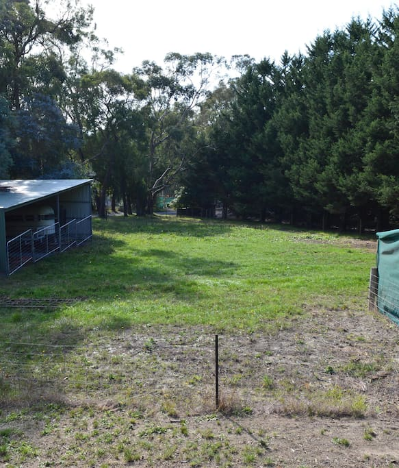 View of the small paddock in front of the Cottage.