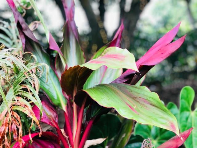 COMFORTABLE & CHARMING LODGE TENT - KOAKALA FARM