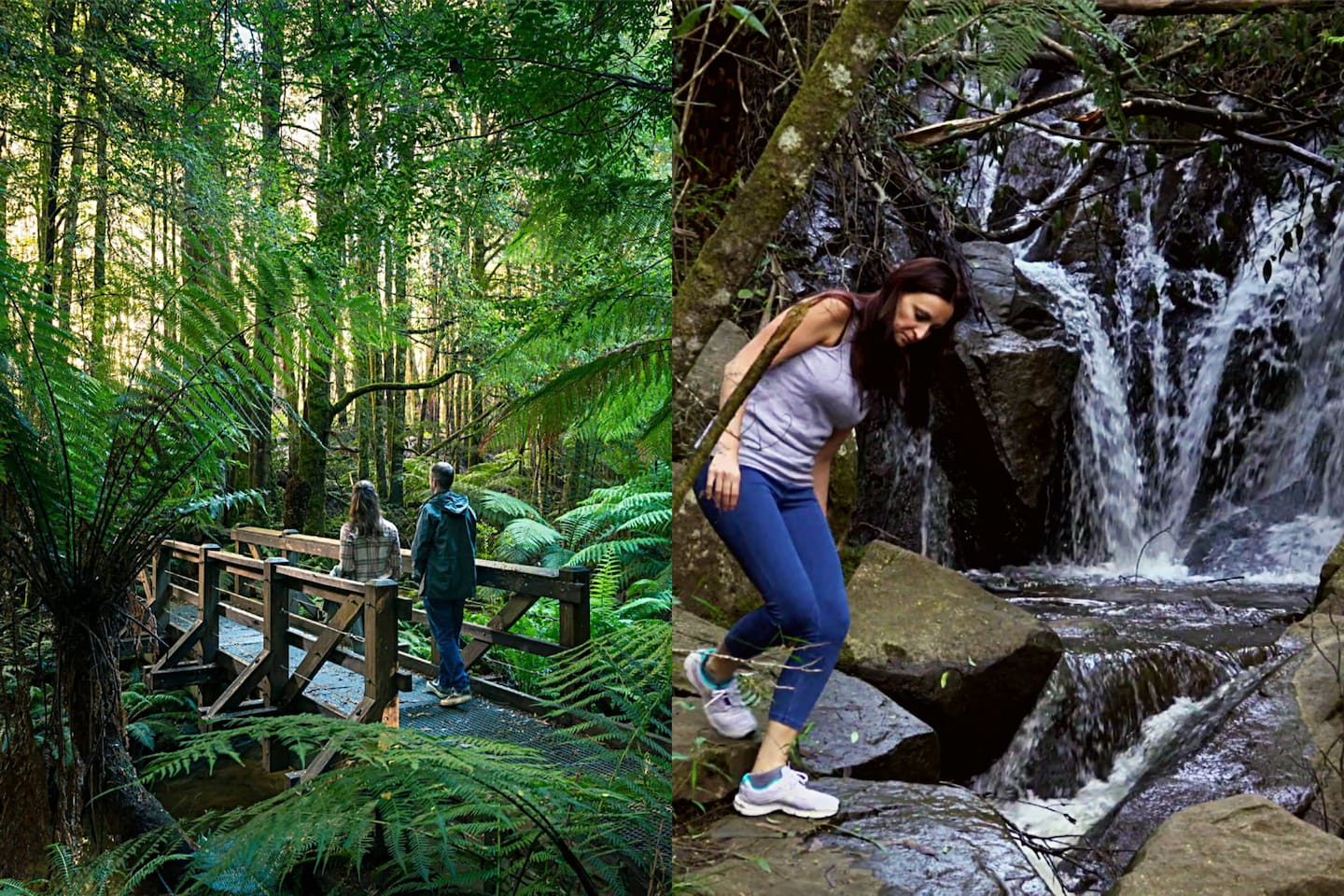 40 minutes by car: Explore the beautiful Forrest bush lands of Melbourne. The Dandenong Rangers. Here you find the hidden Olinda Falls.