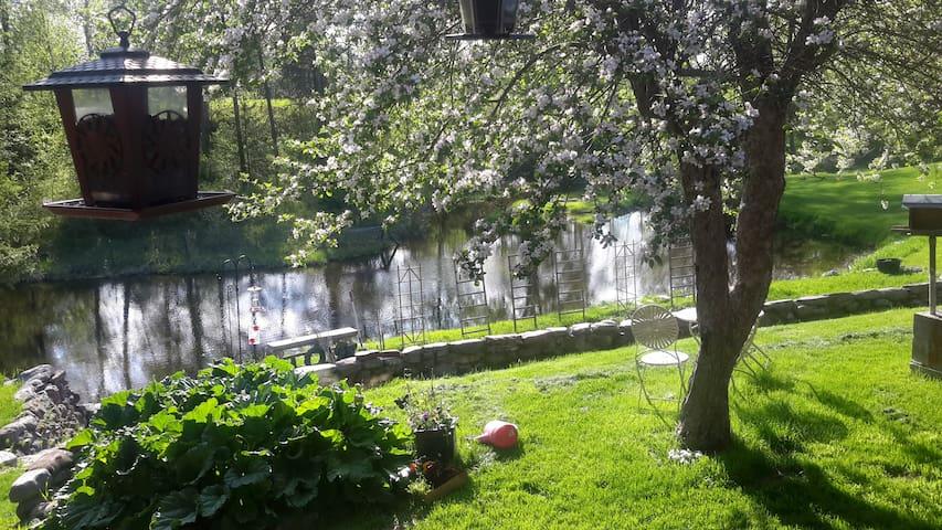 Birder's Paradise - Columbia Falls