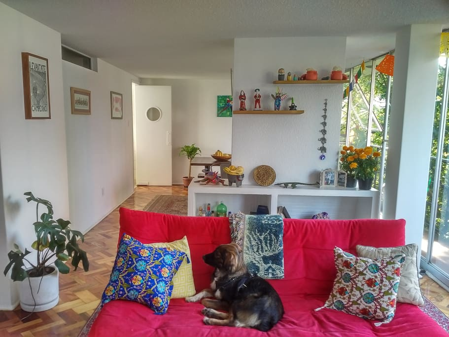 Living Room and Francis (the dog!)