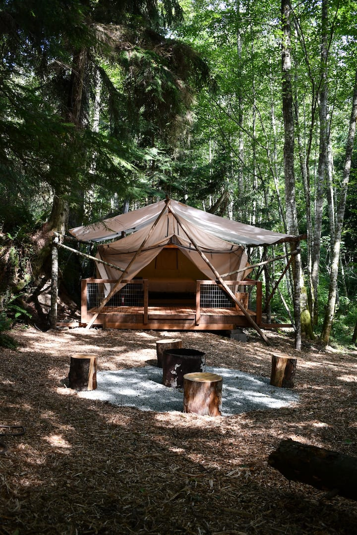 Glamping under the forest canopy