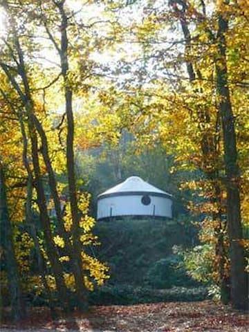 Rustic Large Woodland Yurt in Devon Woods