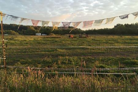 Midcentury farmhouse - Bayside