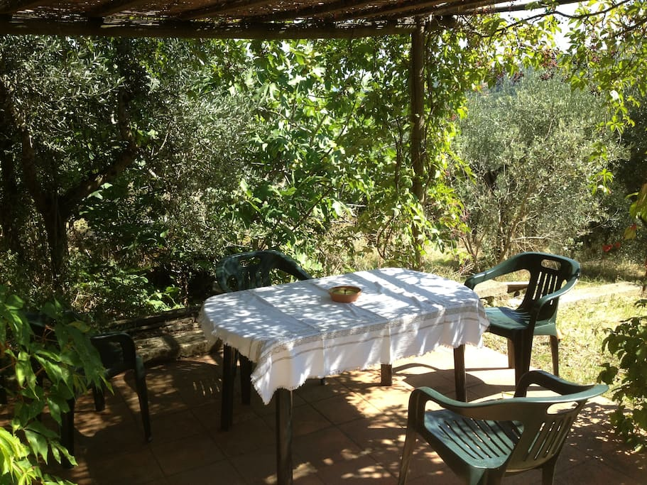 Private garden in olive grove with fig trees and pergola covered patio with garden table and chairs.