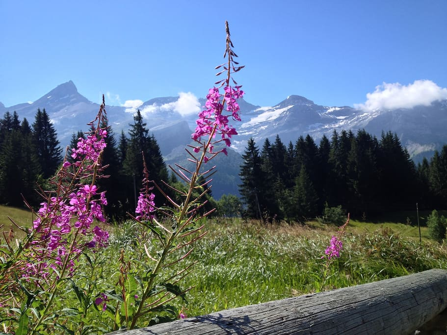 view from the chalet towards the massif of Les Diablerets
