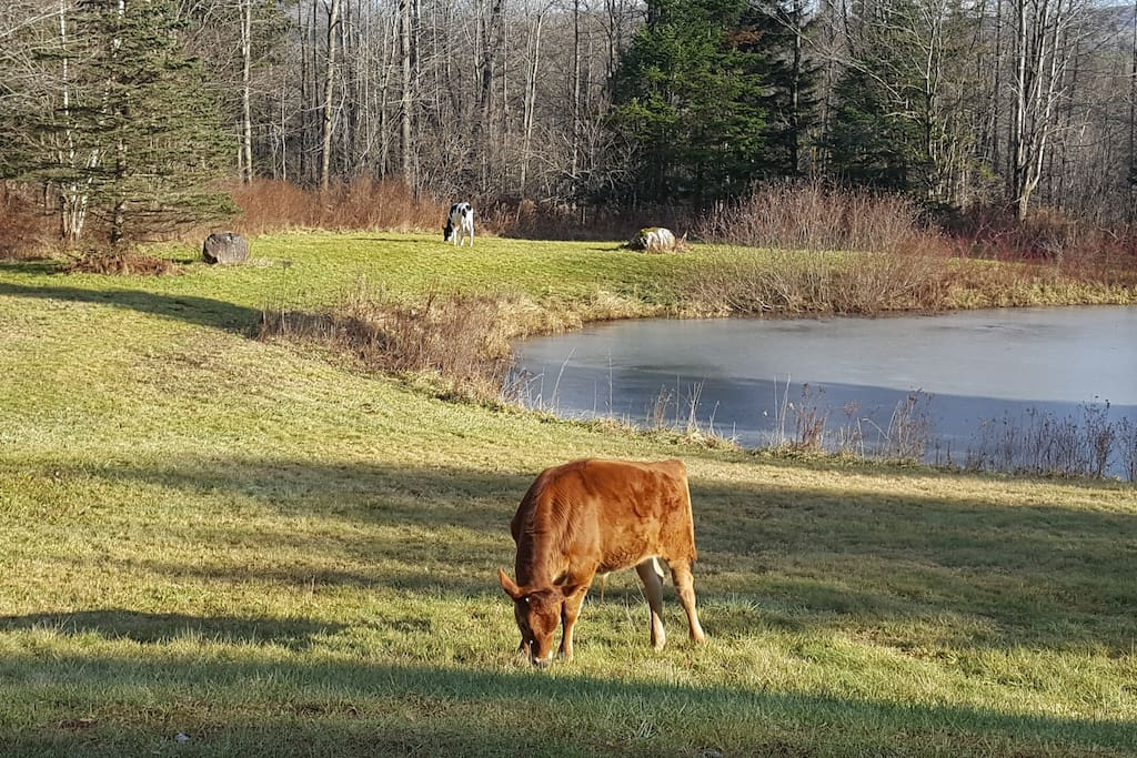 SAFE is a sanctuary for farm animals in the Eastern Townships