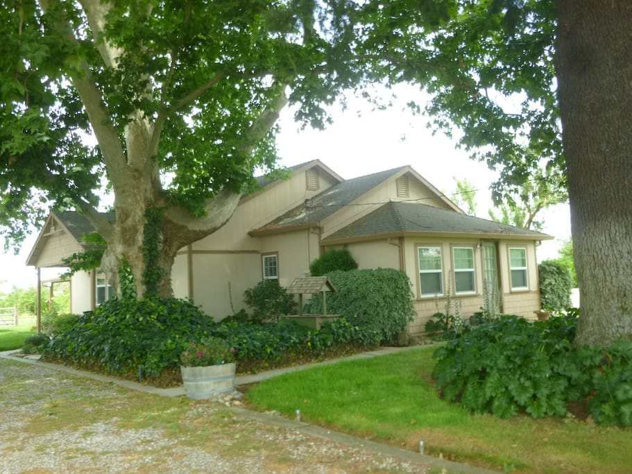 The sycamore tree and the evergreen are enormous stately trees that give us a beautiful shaded front lawn
