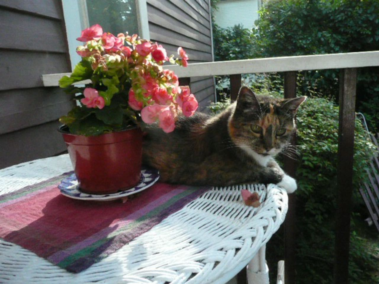 Fifi (RIP 2/12/2016) sunbathing on the back porch.