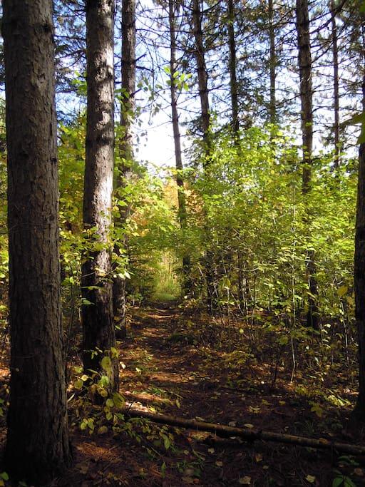 Forêt entre le refuge et la rivière.
