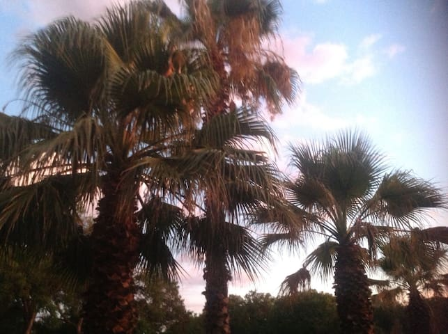2/1, private, palms and cacti