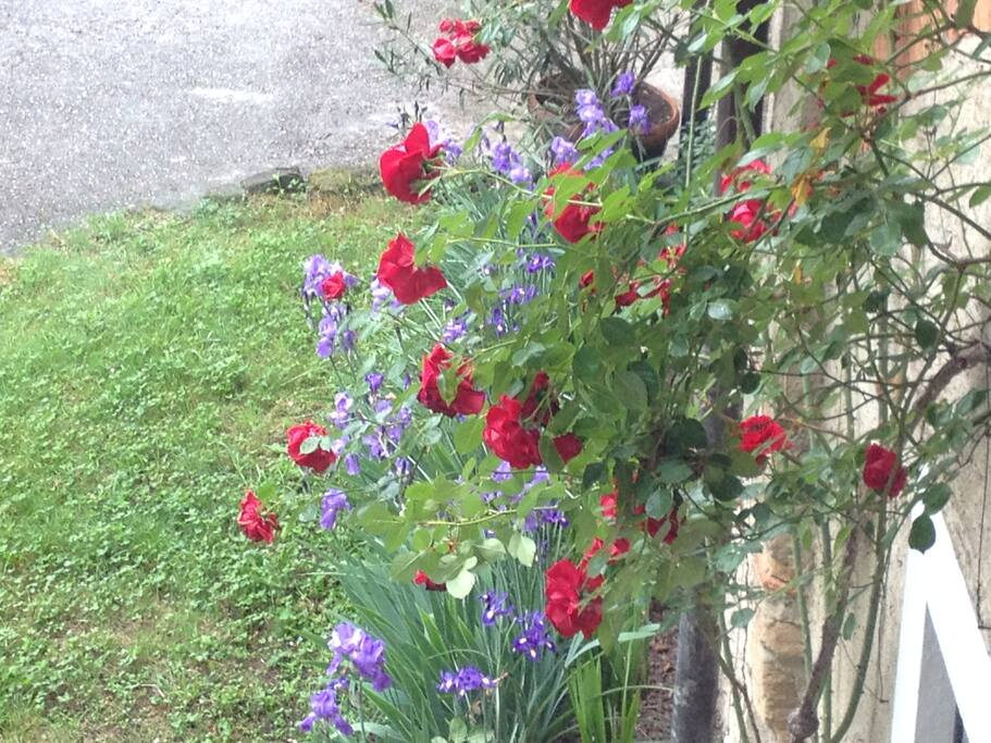 Il giardino, le rose, gli iris