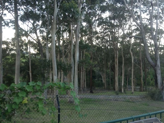 Behind our home, Koala Habitat.