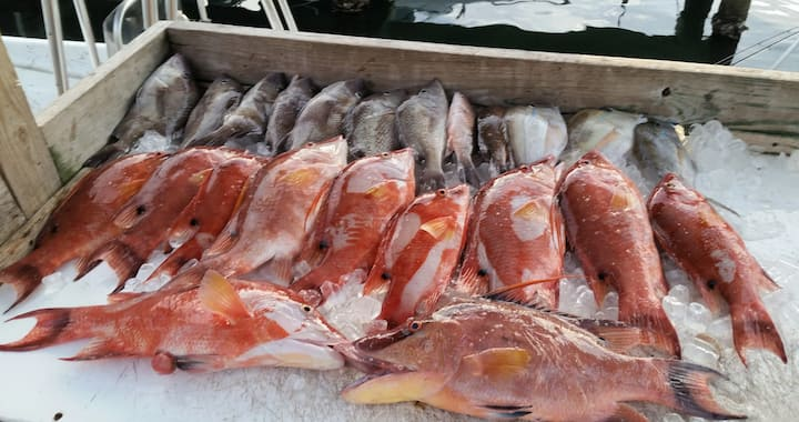 Hogfish, Grunts, Snapper & Porgy