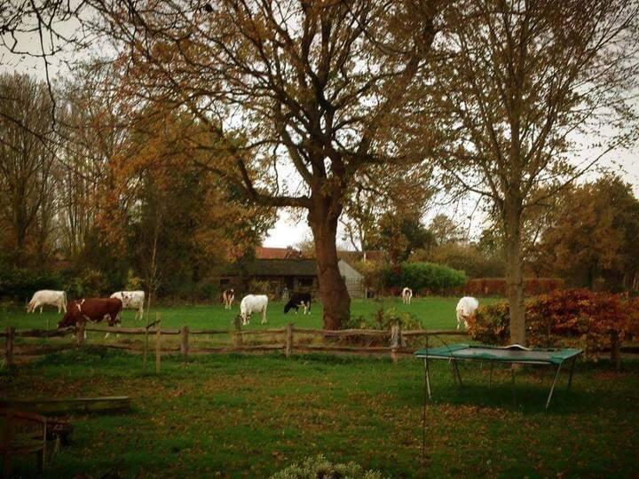 Landelijk huis dichtbij Eindhoven in de natuur