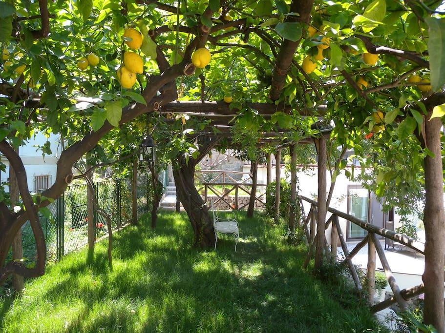 Il Giardino del Fauno - Lemon Garden