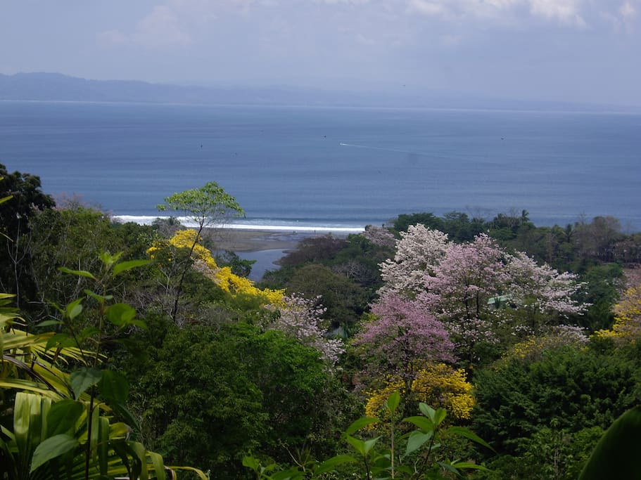 Surf break (on a small day) as seen from the hill that backs your cabin