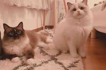 猫咪,客人拍的Belle和圆圆