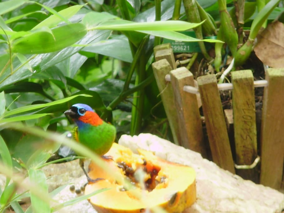 birds love fruit