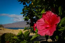 Views from the property here at Kihei Bay Vista are breath-taking!